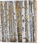 Birch Trees No.0644 Wood Print