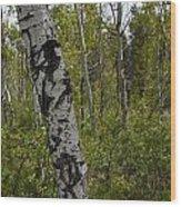 Birch Trees Wood Print