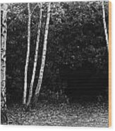 Birches In Black And White Wood Print