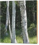 Birches On A Meadow Wood Print
