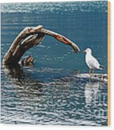 Bird And Log Wood Print by Barry Shaffer