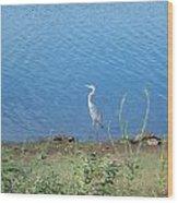 Bird At Lake Varner Wood Print