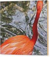 Bird Bath Wood Print