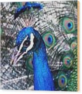 Bird Beauty Wood Print