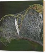 Bird-cherry Ermine Caterpillars Wood Print