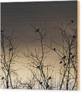 Bird Cove Wood Print