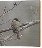 Bird - Eastern Phoebe - Very Contented Wood Print