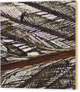 Bird Feather Wood Print
