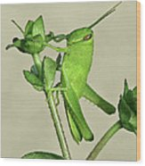 Bird Grasshopper Nymph Wood Print