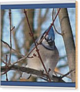 Bird Of Blue Wood Print