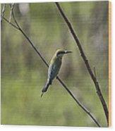 Bird Of Color Wood Print