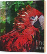 Bird Of Exotic Color Wood Print by Christine Mayfield