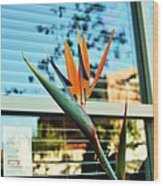 Bird Of Paradise-2 Wood Print