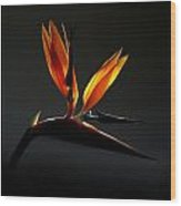 Bird Of Paradise 3 Wood Print