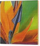 Bird Of Paradise Wood Print by Prashant Shah