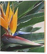Bird Of Paridise Wood Print