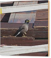 Bird On Boat Wood Print