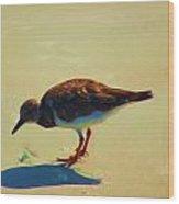 Bird On Daytona Beach Wood Print