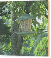 Bird On Full Feeder Wood Print