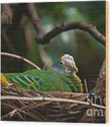 Bird On Nest Wood Print