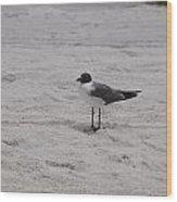 Bird On The Beach 2 Wood Print