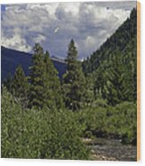 Bird Over Vail 1 Wood Print