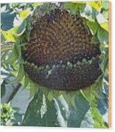 Bird Seed Wood Print