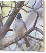 Bird - Tufted Titmouse - Busted Wood Print