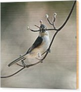 Bird - Tufted Titmouse - Wind Rider Wood Print
