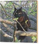 Birding  0052 Wood Print