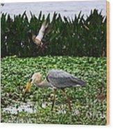 Birding Action At Circle B Bar Reserve Wood Print