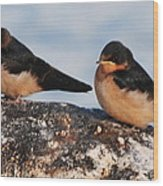 Birding Wood Print