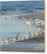 Birds And One Lone Seagull. Wood Print