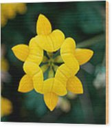 Bird's Foot Trefoil Wood Print