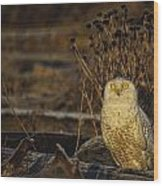 Birds Of Bc - No.12 - Snowy Owl - Bubo Scandiacus Wood Print by Paul W Sharpe Aka Wizard of Wonders