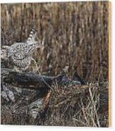 Birds Of Bc - No.13 - Snowy Owl Doo Doo Wood Print