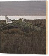 Birds Of Bc - No.15 - Snowy Owl - Bubo Scandiacus Wood Print