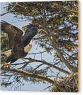 Birds Of Bc - No.27 - Bald Eagle - Haliaeetus Leucocephalus Wood Print