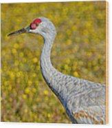 Birds Of Bc - No. 35 - Young Sand Hill Crane Wood Print