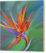 Birds Of Paradise 1 Wood Print