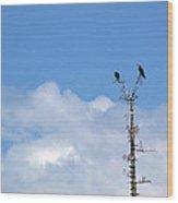 Birds Of Prey At Peace Wood Print