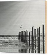 Birds On Outer Banks Wood Print