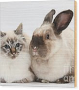 Birman Cat And Colorpoint Rabbit Wood Print