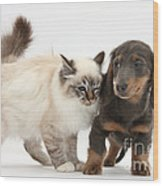 Birman Cat And Dachshund Puppy Wood Print
