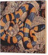 Bismarck Ringed Python Liasis Boa Wood Print