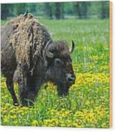 Bison And Friend Wood Print
