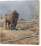 Bison And Geyser Wood Print