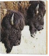 Bison Bison Wood Print