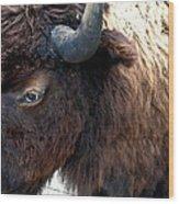 Bison Bison Up Close Wood Print