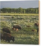 Bison Graze On Grasslands In The Park Wood Print